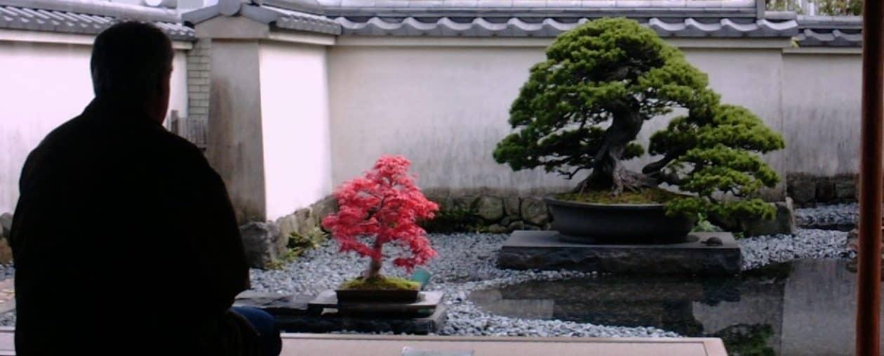 Bonsai & Trädgård
